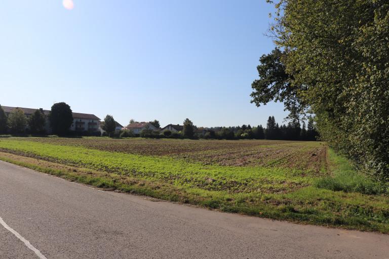 Weniger begrünt - Wörnbrunner Straße